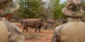 Rhinoceros 7.1 Crack + License Key 2021 Free Download